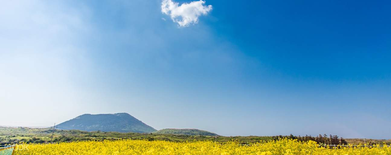 Capture the peaceful scenery of Jeju and take some pictures